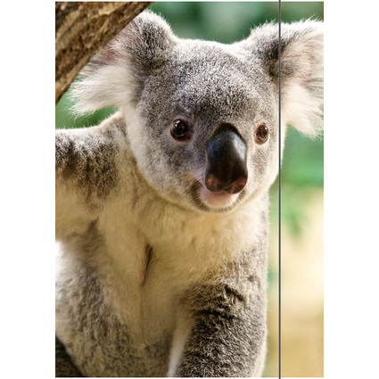 """RNK Verlag Zeichnungsmappe/Sammelmappe """"Koala"""", DIN A3"""
