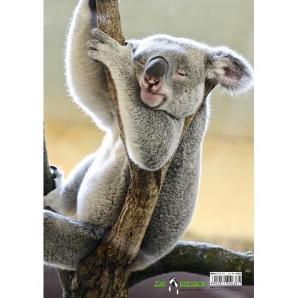 """RNK Verlag Zeichnungsmappe """"Koala"""", DIN A4"""