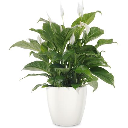 emsa Blumenkübel CASA BRILLIANT, Durchmesser: 280 mm, weiß